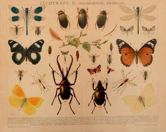 Antique print.1894.Option of  reproduction of species.Color Lithograph.120 year old print.Biology .Zoology print.12.1x9.8 inches,31x25 cm.
