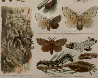 Antique print.1893 Insects.Color lithograph.INSECTS.124 year old print.Biology print.Zoology print.11.9x9.5 inches.30x24 cm.Old print.