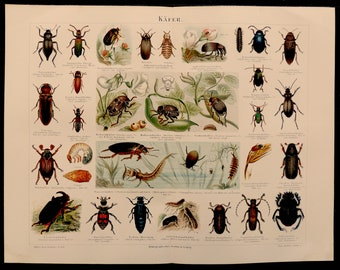 Antique print.1893 Insects.Color lithograph.BEETLES.125 year old print.Biology print.Zoology print.11.9x9.5 inches.30x24 cm.Old print.