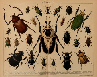 Antique print.1894.Beettles,Insects, lithograph in color.123 years old print.Biology print.Zoology print.12,1x9,8 inches,31x25cm.