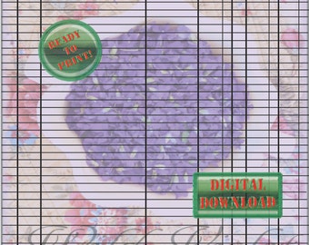 beignets check register sheets black and white debit checking etsy