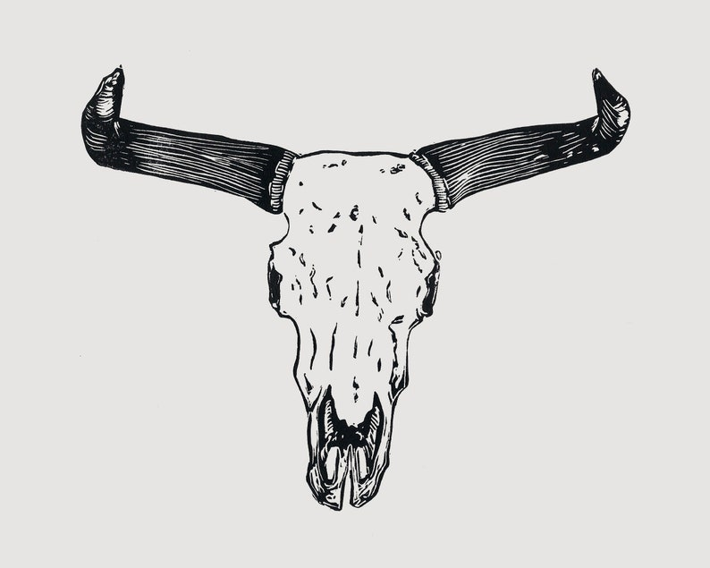 Steer skull linocut  skull and horns taxidermy art cow image 0