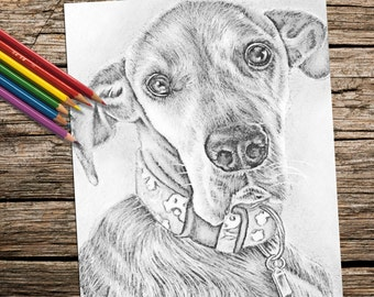 Printable coloring page, adult coloring pages, Coloring Book for adults, Coloring book, Instant download coloring, Great Dane, dog coloring
