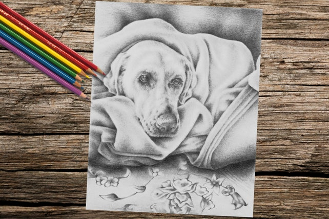 Imprimir página adultos página para colorear para colorear | Etsy