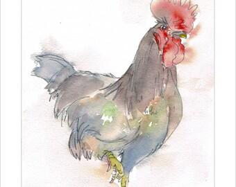 Rooster Cockerel Portrait Wildlife Art by Lesley Silver BA, Wife of award winning artist John SIlver. Personally signed A4 Print. LRO001SP