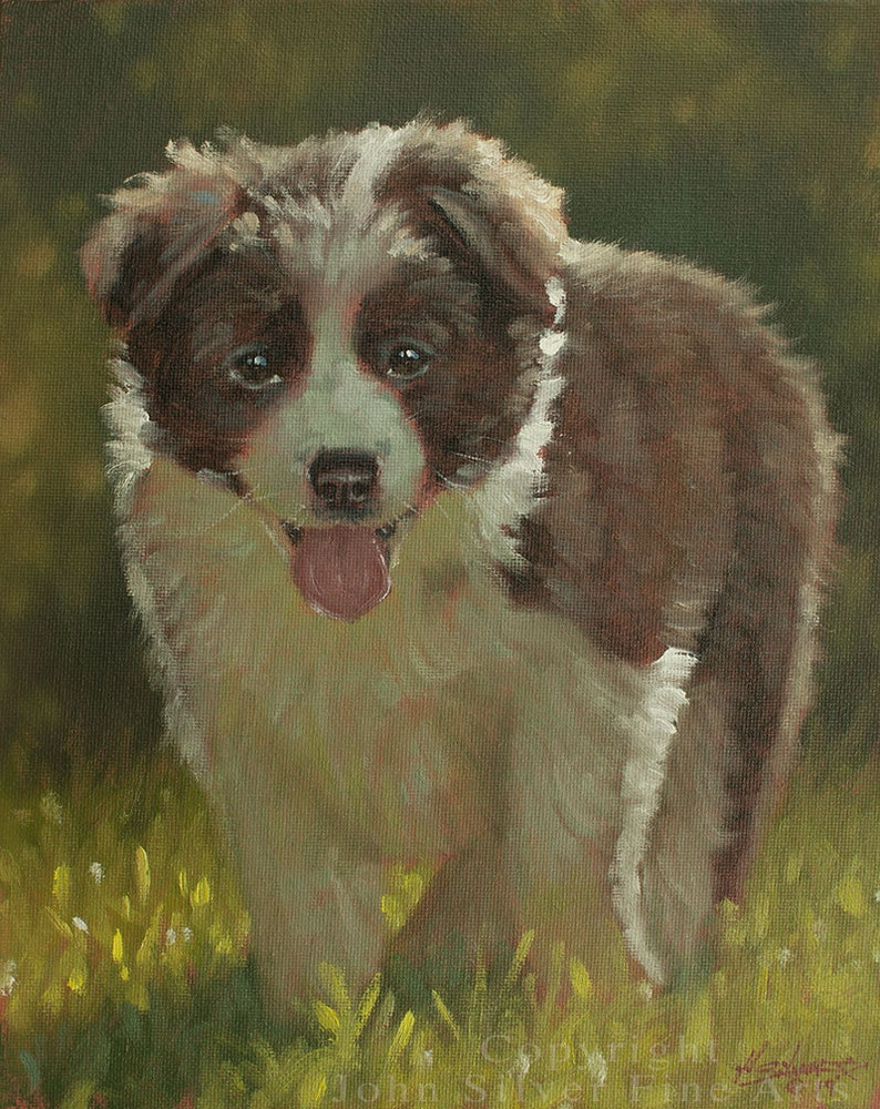 Border Collie Puppy Dog Classical Portrait. Original Oil image 0