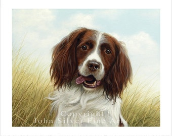 Springer Spaniel Portrait. Limited Edition Print. Personally signed and numbered by JOHN SILVER. jsfa044