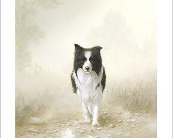 Border Collie Dog Portrait by award winning artist JOHN SILVER. Personally signed A4 or A3 size Print. BC012SP