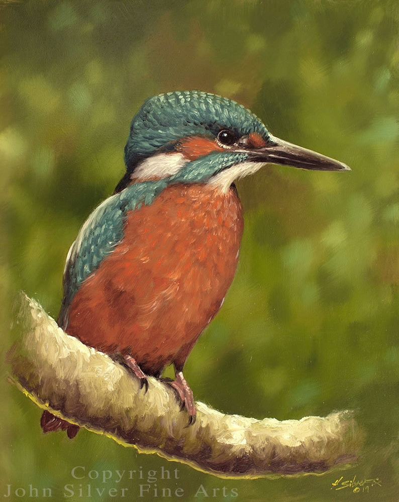 Kingfisher Portrait. Original Oil Painting by award winning image 0