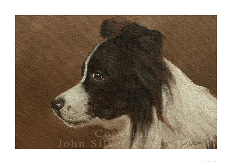 Border Collie Dog Portrait  by award winning artist JOHN image 0