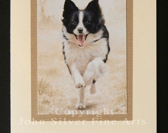 Border Collie Dog Portrait Hand Made Greetings Card. From Original Paintings by JOHN SILVER. GCBC013