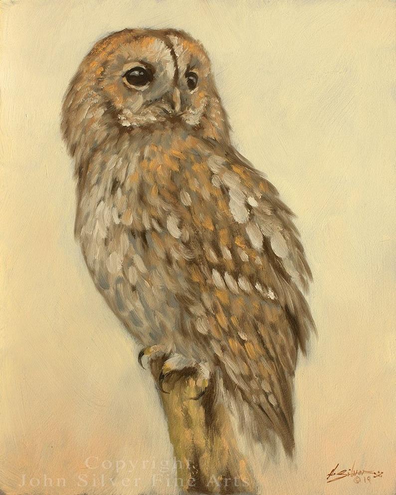 Tawny Owl Portrait. Original Oil Painting by award winning image 0
