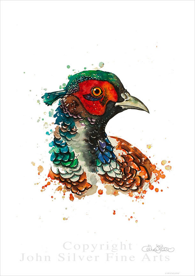 Pheasant Portrait Wildlife Art by Emma Steel Daughter of image 0