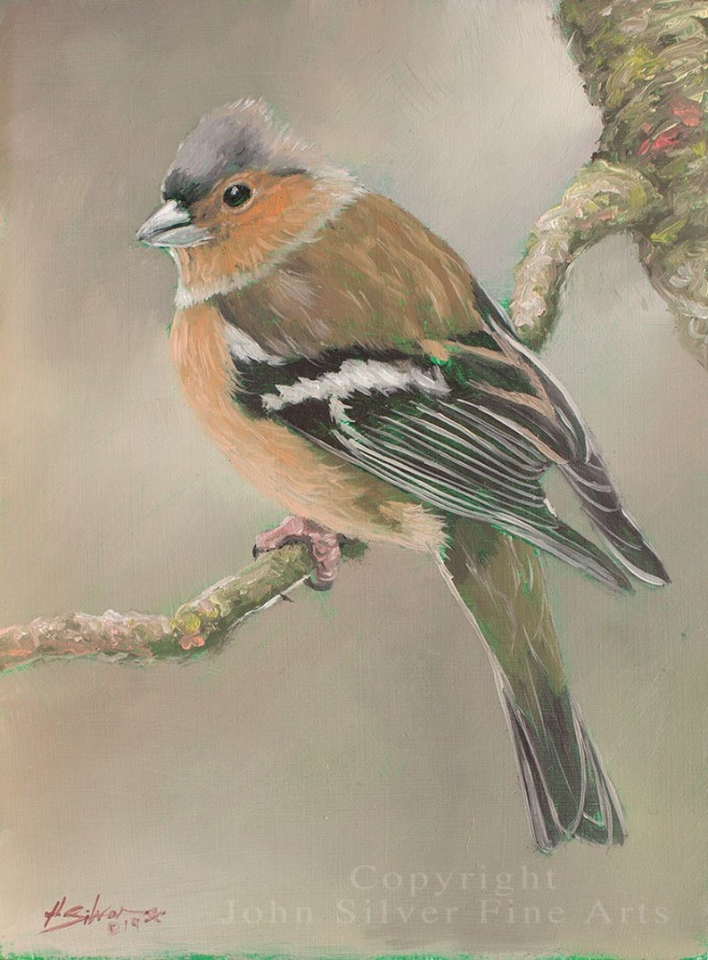 Chaffinch Portrait. Original Oil Painting by award winning image 0