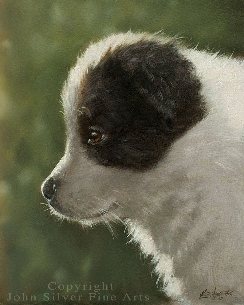 Border Collie Puppy Dog Classical Portrait. Original Oil image 0
