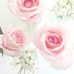 Cake Flowers - 3 Pale Pink Semi Real Touch Roses with Baby's Breath for Cake Decoration. Single Loose Stems.