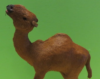 Vintage Camel African Taxidermy Real Fur Animal Figurine - Free Shipping
