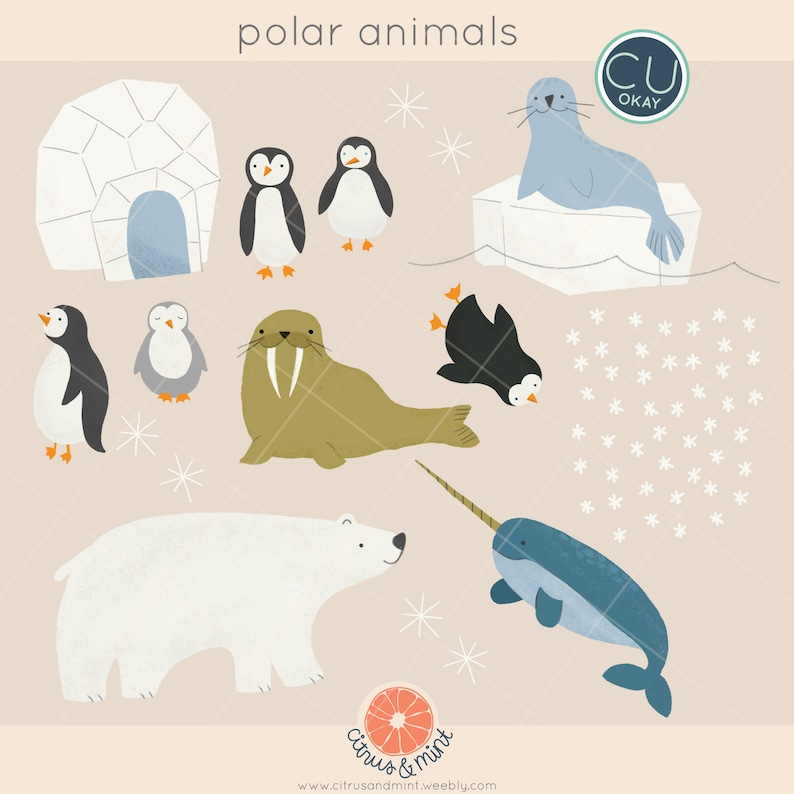 Polar Animals Clip Art Graphics Penguins Narwhal Walrus  image 0