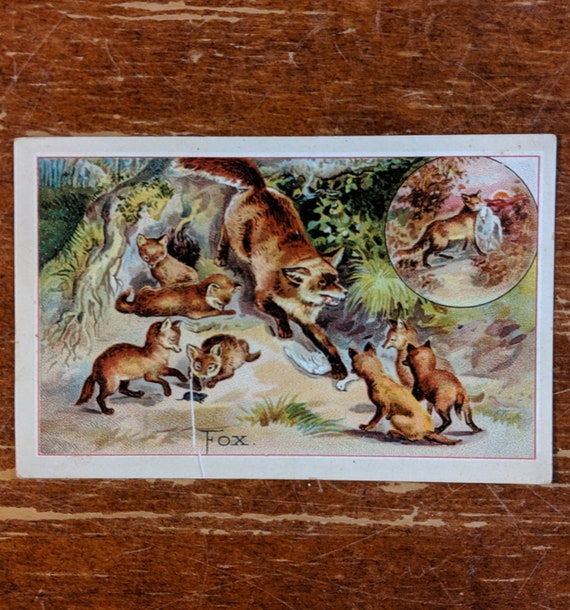 Vintage Salesman Calling Card Red Foxes Armor Plate