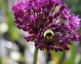 Photo Print - Bumble Bee