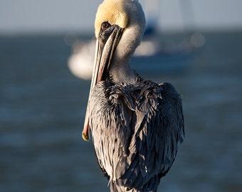 Key Largo Yellow Haired Pelican, Pelican Photography, Pelican Art, Pelican Decor, Pelican Print, Nautical Photography, Nautical Decor