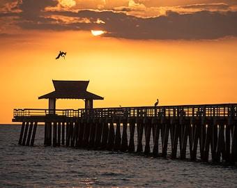 Pelcian Divebombing the Naples Pier, Naples FL, Naples Florida, Naples Pier, Naples Sunset, Naples Photography, Pelican Photography