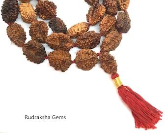 2 Mukhi Rudraksha Mala - Two Face Rudraksha Japa Mala  - Rudraksha Kantha Mala Necklace 33+1 Rudraksh Japa COLLECTOR BEADS OM - Meditation