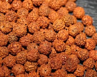 Rudraksha Beads - 10 MM Natural Rudraksha Beads - Loose Rudraksh Beads - Meditation prayer beads - Yoga Jewellry Findings DIY Accessories