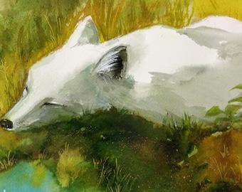 Little White Fox- reproduction print
