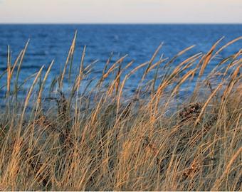Beach Grass Photography Fall Dunes Coastal Art Neutral Decor Ocean Seascape Cape Cod Sea Artwork Landscape Photograph Nature Print Seaside