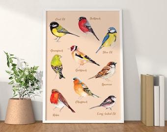 Colourful Modern British Garden Birds identification chart Art Print