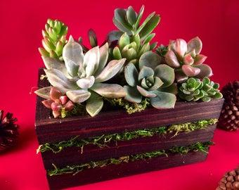 Mossy Succulent Crate