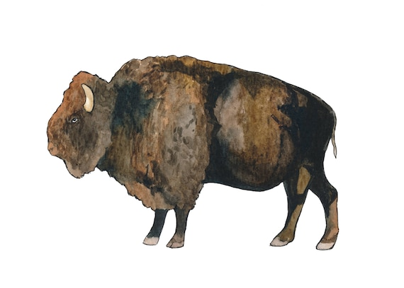 Watercolor Buffalo Print