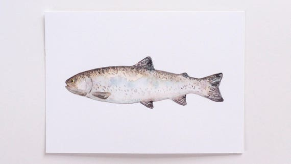 Original 5x7 Watercolor Fish Painting