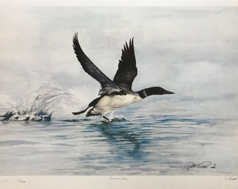 Robert Pow 'Common Loon' - Hand Signed Print - Nature - Others Available - GallArt
