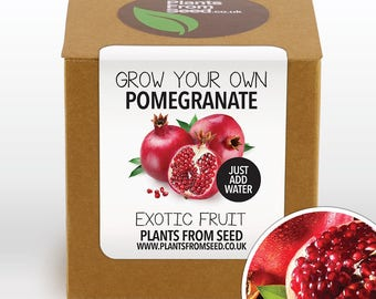CHRISTMAS SALE!!! - Grow Your Own Pomegranate Fruit Plant Kit