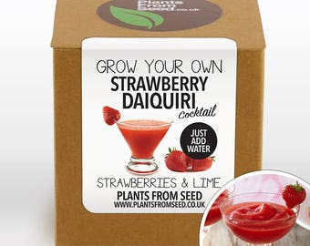 SALE!!! - Grow Your Own Strawberry Daiquiri Plant Kit