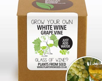 SALE!!! - Grow Your Own White Grape Vine Kit