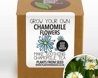 CHRISTMAS SALE!!! - Grow Your Own Chamomile Tea Plant Kit