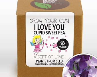 CHRISTMAS SALE!!! - Grow Your Own Cupid Sweet Pea Plant Kit