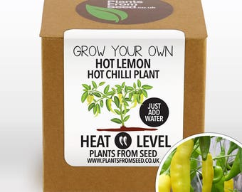 CHRISTMAS SALE!!! - Grow Your Own Hot Lemon Chilli Plant Kit
