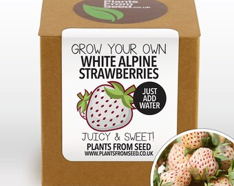 SALE!!! - Grow Your Own White Alpine Strawberries Plant Kit