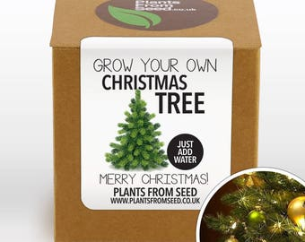 SALE!!! - Grow Your Own Christmas Tree Plant Kit