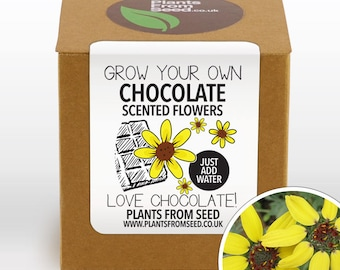 CHRISTMAS SALE!!! - Grow Your Own Chocolate Scented Flowers Plant Kit