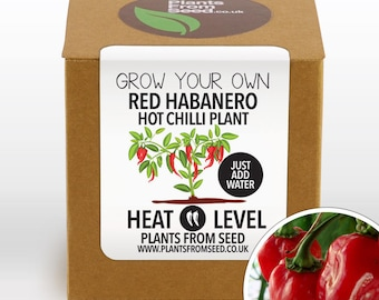 CHRISTMAS SALE!!! - Grow Your Own Red Habanero Chilli Plant Kit