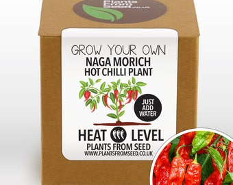 CHRISTMAS SALE!!! - Grow Your Own Naga Chilli Plant Kit