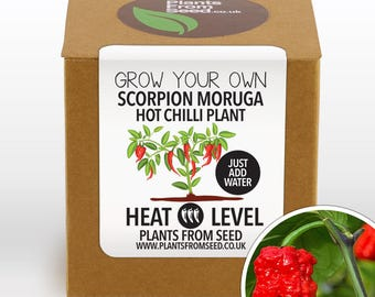 CHRISTMAS SALE!!! - Grow Your Own Scorpion Moruga Chilli Plant Kit