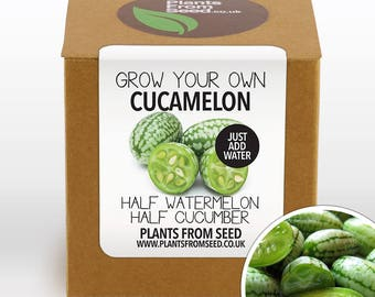 CHRISTMAS SALE!!! - Grow Your Own Cucamelon Plant Kit
