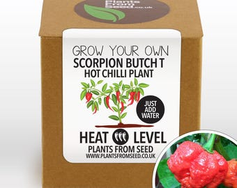CHRISTMAS SALE!!! - Grow Your Own Scorpion Butch T Chilli Plant Kit