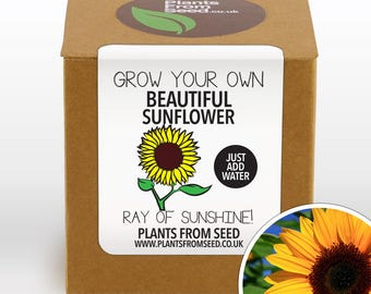 CHRISTMAS SALE!!! - Grow Your Own Sunflower Plant Kit